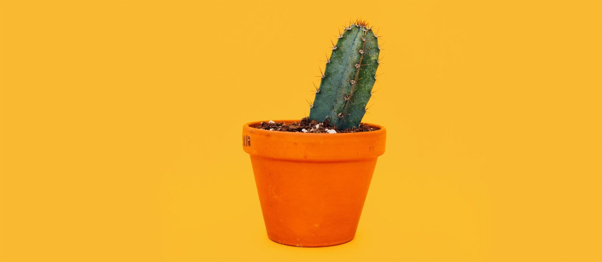 multiplicar una planta crasa