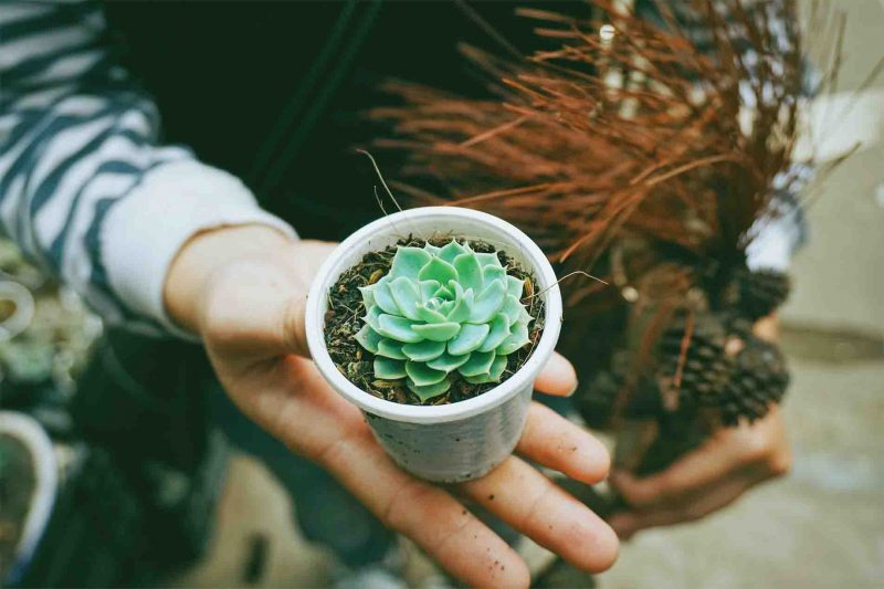Multiplicar un cactus