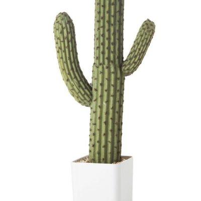 Cactus artificiales de plástico