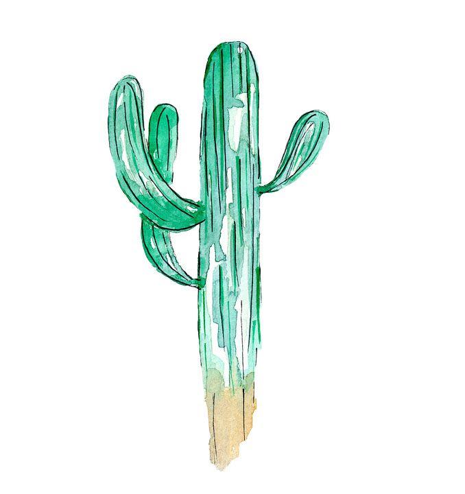 Los Mejores Dibujos De Cactus Inspírate