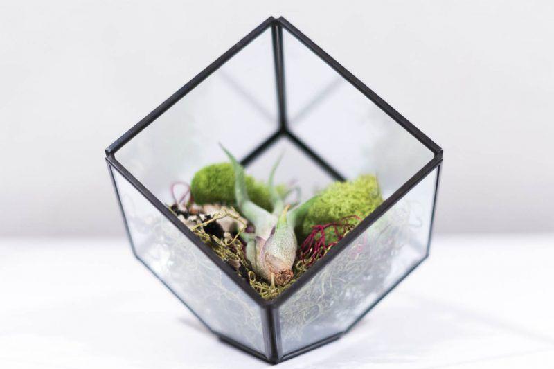 Decorar terrarios con cactus