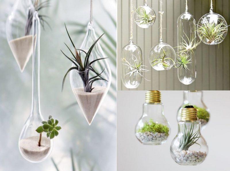 ¿Aburrido de la decoración con cactus en macetas?