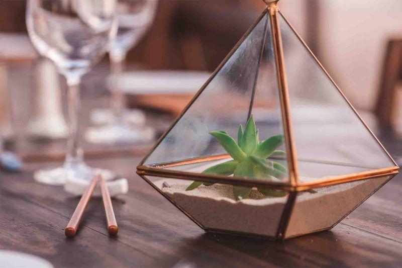 Plantar cactus en terrarios de cristal