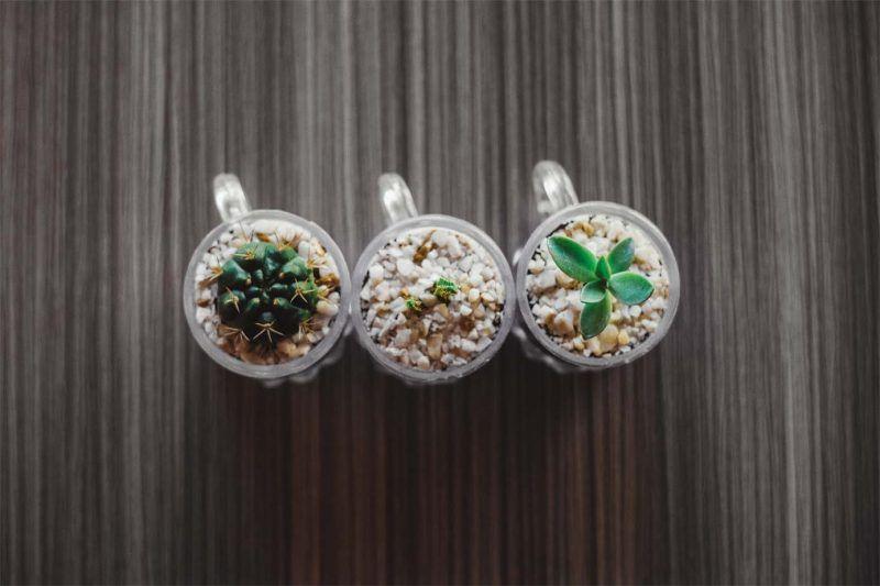 ¿Una alternativa podría ser la decoración de cactus en el baño?