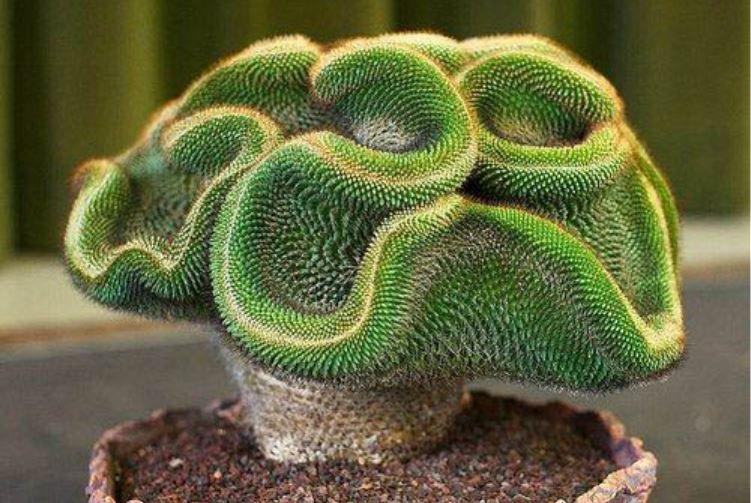 significado de la planta suculenta