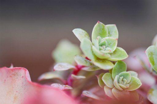plantas suculentas como cuidarlas